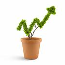 Plant in pot shaped like graph. Wealth concept.jpeg